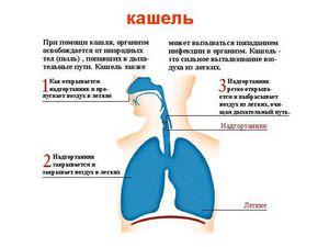 бронхиальная астма лечение барсучьим жиром у детей